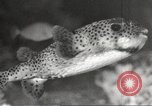 Image of tropical fishes Holland Netherlands, 1965, second 36 stock footage video 65675061772
