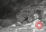 Image of tropical fishes Holland Netherlands, 1965, second 41 stock footage video 65675061772