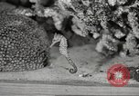 Image of tropical fishes Holland Netherlands, 1965, second 44 stock footage video 65675061772