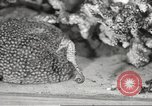 Image of tropical fishes Holland Netherlands, 1965, second 45 stock footage video 65675061772