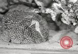 Image of tropical fishes Holland Netherlands, 1965, second 46 stock footage video 65675061772