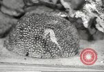 Image of tropical fishes Holland Netherlands, 1965, second 47 stock footage video 65675061772