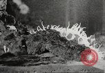 Image of tropical fishes Holland Netherlands, 1965, second 51 stock footage video 65675061772