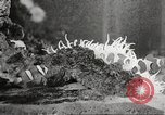 Image of tropical fishes Holland Netherlands, 1965, second 52 stock footage video 65675061772