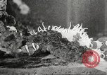 Image of tropical fishes Holland Netherlands, 1965, second 53 stock footage video 65675061772