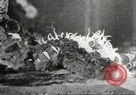 Image of tropical fishes Holland Netherlands, 1965, second 54 stock footage video 65675061772