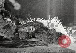 Image of tropical fishes Holland Netherlands, 1965, second 55 stock footage video 65675061772