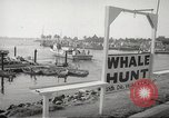 Image of Grey Whale California United States USA, 1966, second 10 stock footage video 65675061790