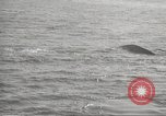 Image of Grey Whale California United States USA, 1966, second 28 stock footage video 65675061790
