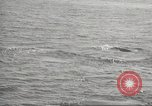 Image of Grey Whale California United States USA, 1966, second 29 stock footage video 65675061790