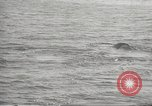 Image of Grey Whale California United States USA, 1966, second 30 stock footage video 65675061790