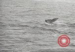 Image of Grey Whale California United States USA, 1966, second 31 stock footage video 65675061790