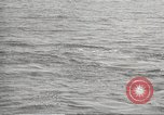 Image of Grey Whale California United States USA, 1966, second 32 stock footage video 65675061790