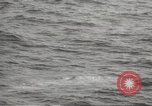 Image of Grey Whale California United States USA, 1966, second 37 stock footage video 65675061790
