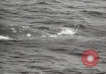 Image of Grey Whale California United States USA, 1966, second 40 stock footage video 65675061790