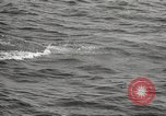 Image of Grey Whale California United States USA, 1966, second 41 stock footage video 65675061790