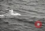 Image of Grey Whale California United States USA, 1966, second 42 stock footage video 65675061790