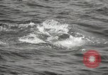 Image of Grey Whale California United States USA, 1966, second 44 stock footage video 65675061790
