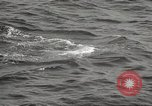 Image of Grey Whale California United States USA, 1966, second 45 stock footage video 65675061790
