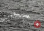 Image of Grey Whale California United States USA, 1966, second 54 stock footage video 65675061790