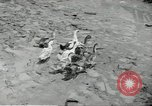 Image of fall of Singapore Singapore, 1942, second 23 stock footage video 65675061821
