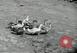 Image of fall of Singapore Singapore, 1942, second 26 stock footage video 65675061821