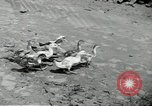 Image of fall of Singapore Singapore, 1942, second 27 stock footage video 65675061821