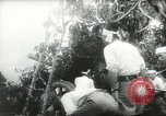 Image of Japanese troops Malay jungle Kuantan, 1942, second 24 stock footage video 65675061825