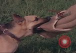 Image of 88th Military Police Corps Vietnam, 1965, second 17 stock footage video 65675061960