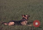 Image of 88th Military Police Corps Vietnam, 1965, second 50 stock footage video 65675061961
