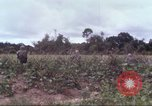 Image of 1st Infantry Division Vietnam, 1965, second 15 stock footage video 65675061976