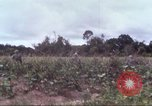 Image of 1st Infantry Division Vietnam, 1965, second 16 stock footage video 65675061976