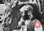 Image of threat of plague Germany, 1945, second 56 stock footage video 65675068489