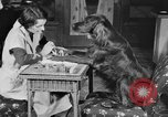 Image of beauty treatments for dogs Portland Oregon USA, 1931, second 21 stock footage video 65675070930