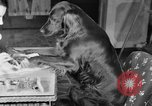 Image of beauty treatments for dogs Portland Oregon USA, 1931, second 26 stock footage video 65675070930