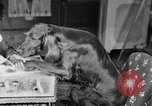 Image of beauty treatments for dogs Portland Oregon USA, 1931, second 28 stock footage video 65675070930