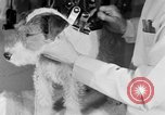Image of beauty treatments for dogs Portland Oregon USA, 1931, second 47 stock footage video 65675070930