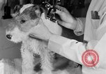 Image of beauty treatments for dogs Portland Oregon USA, 1931, second 48 stock footage video 65675070930
