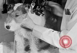 Image of beauty treatments for dogs Portland Oregon USA, 1931, second 49 stock footage video 65675070930