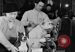 Image of beauty treatments for dogs Portland Oregon USA, 1931, second 55 stock footage video 65675070930