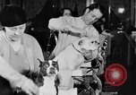 Image of beauty treatments for dogs Portland Oregon USA, 1931, second 56 stock footage video 65675070930