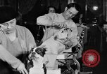 Image of beauty treatments for dogs Portland Oregon USA, 1931, second 57 stock footage video 65675070930