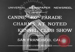 Image of Golden Gate Kennel Club dog show San Francisco California USA, 1932, second 1 stock footage video 65675070937