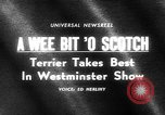 Image of Westminster Kennel Club dog show New York United States USA, 1965, second 3 stock footage video 65675070999