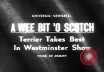 Image of Westminster Kennel Club dog show New York United States USA, 1965, second 5 stock footage video 65675070999