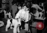 Image of Westminster Kennel Club dog show New York United States USA, 1965, second 8 stock footage video 65675070999