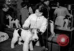 Image of Westminster Kennel Club dog show New York United States USA, 1965, second 9 stock footage video 65675070999