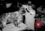 Image of Westminster Kennel Club dog show New York United States USA, 1965, second 15 stock footage video 65675070999