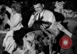 Image of Westminster Kennel Club dog show New York United States USA, 1965, second 19 stock footage video 65675070999