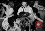 Image of Westminster Kennel Club dog show New York United States USA, 1965, second 21 stock footage video 65675070999